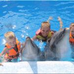 Дельфинарий в Оленевке: полезный отдых на Тарханкуте