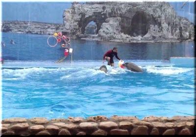 фото дельфинария в Большом Атлеше