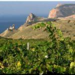 «Золотая балка» — многогранный винзавод с Севастополе