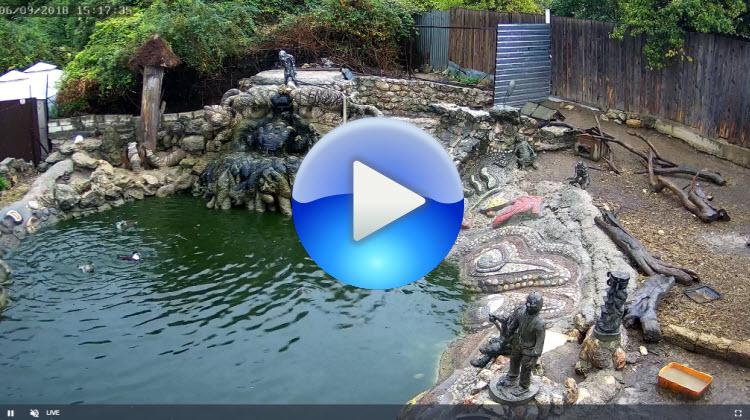 веб-камера в экопарке Лукоморье