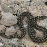 змеи Крыма