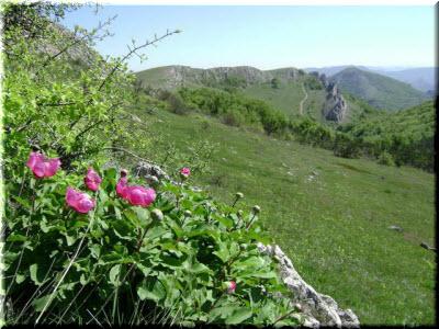 лучший климат в Крыму