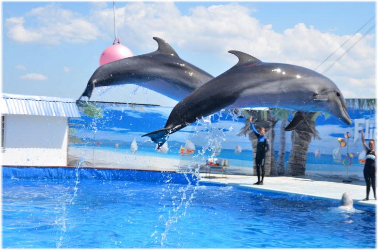 Дельфинарий «Флиппер»