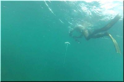кадры с подводной охоты