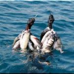 Что нужно знать о подводной охоте в Крыму?