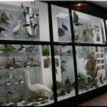 Чем интересен Карадагский музей природы в Феодосии