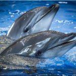 Черноморские афалины — наши собратья по разуму