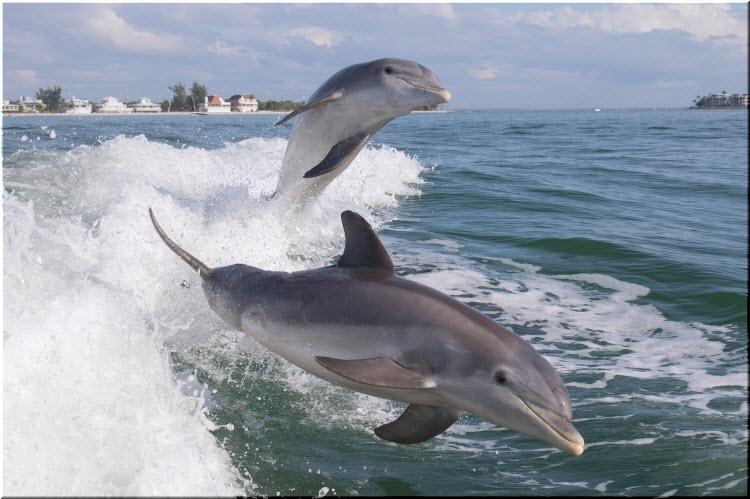 дельфины афалины в Черном море
