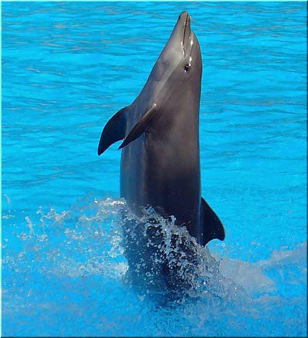 выступления афалин в дельфинарии