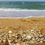 ТОП-5 ракушечных пляжей в Крыму. Рейтинг с фото
