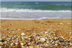 ракушечные пляжи в Курортном