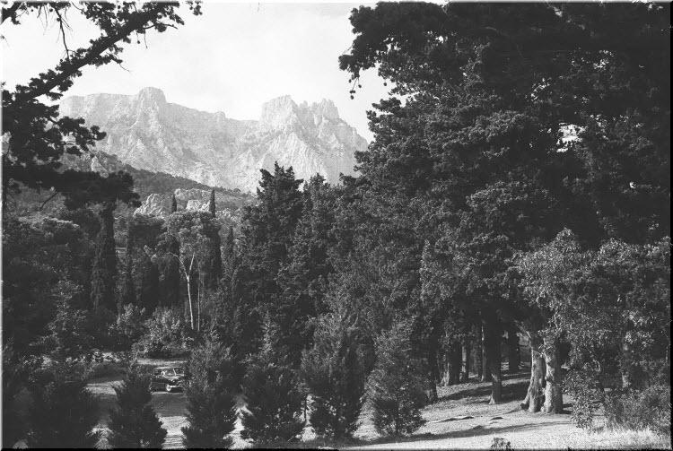 старое фото Милютинского парка