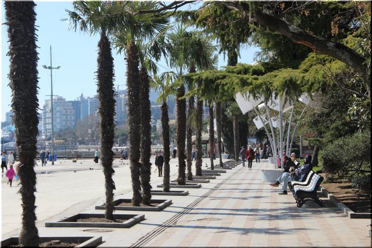 пальмы на набережной Ялты