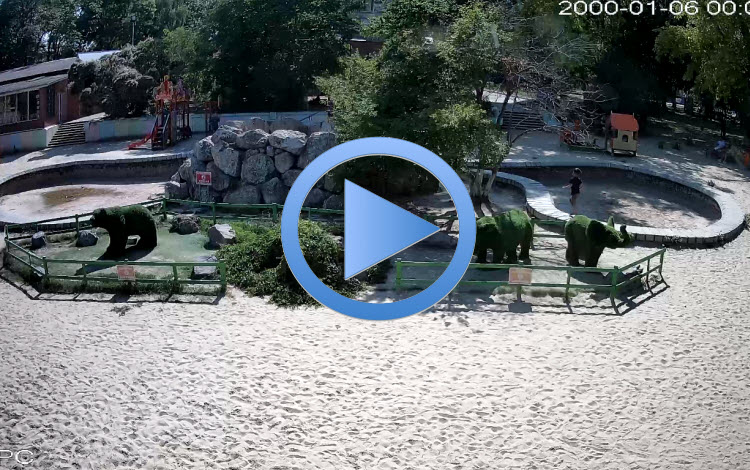 веб-камера в парке Аленка