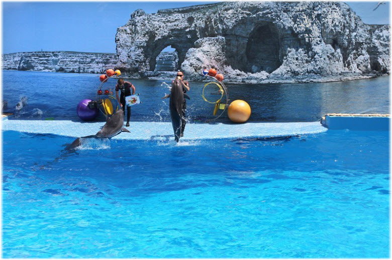 Тарханкутский дельфинарий