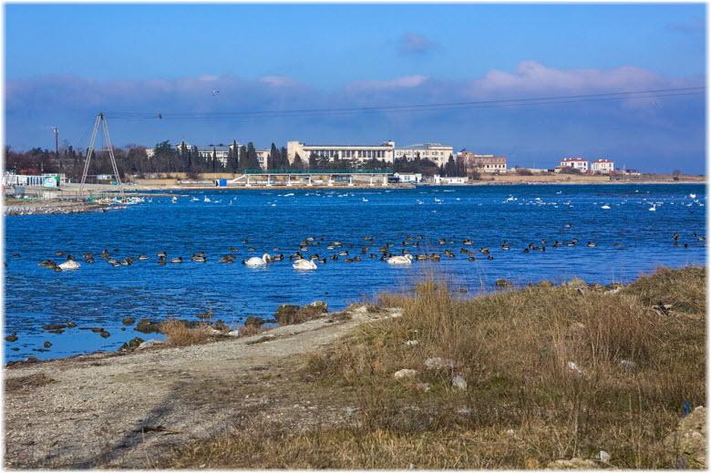 птицы в Круглой бухте