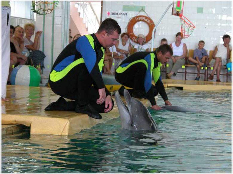 дельфинотерапия в дельфинарии