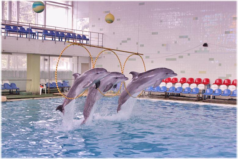 фото Партенитского дельфинария