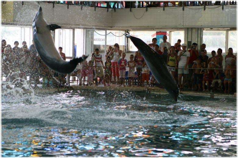 выступления в дельфинарии
