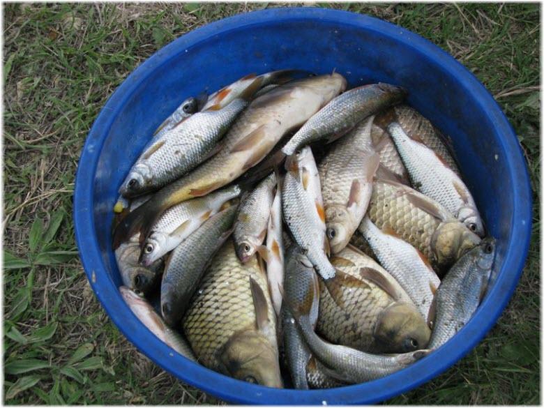 рыбалка на Чекурелли
