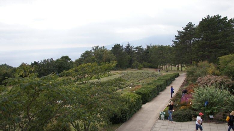 Одна из аллей парка при Массандровском дворце