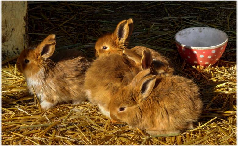Кроликопарк