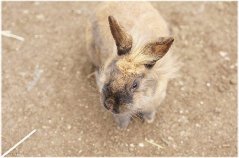 кролики на кроликоферме