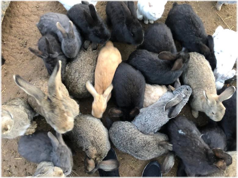 кролики в парке