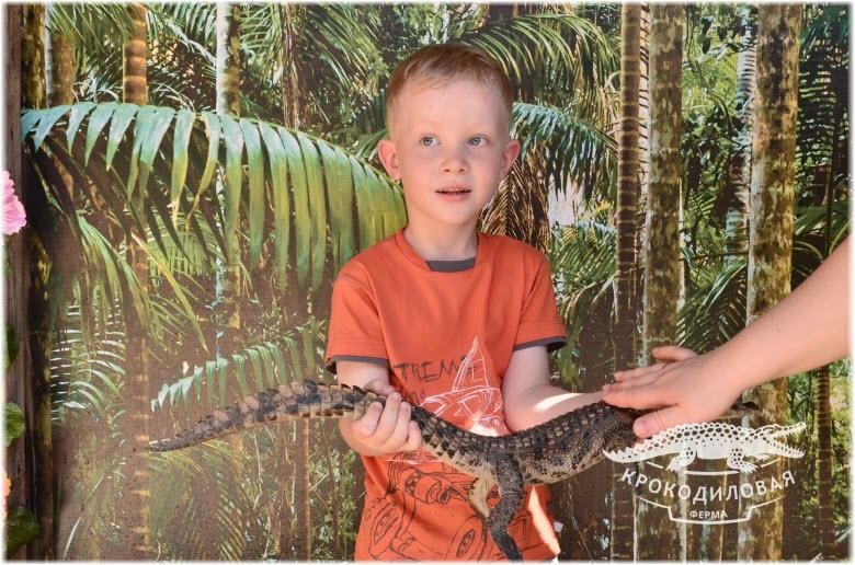 фото маленьких крокодилов