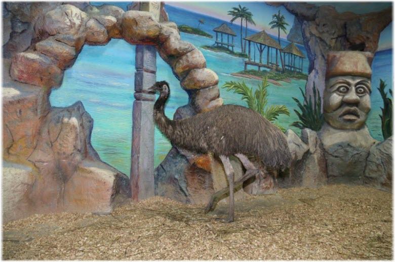 страусы зоопарка