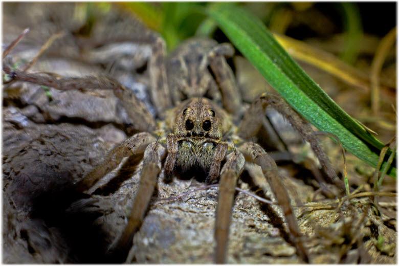 фото паука в траве